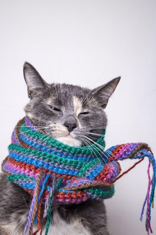 Милый маленький кот подготовленный на зима и в оболочке в шерстяном связанном шарфе, нагревал и начинал падать уснувший, на сером стоковое фото
