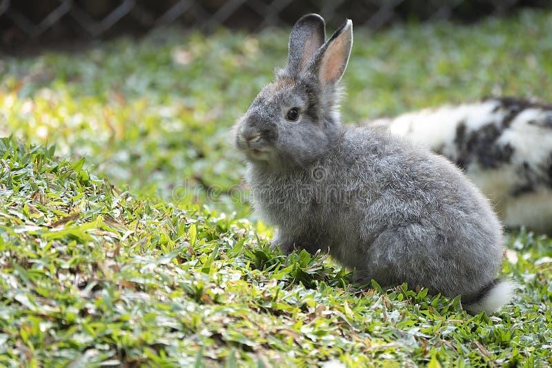 милый маленький кролик стоковое изображение