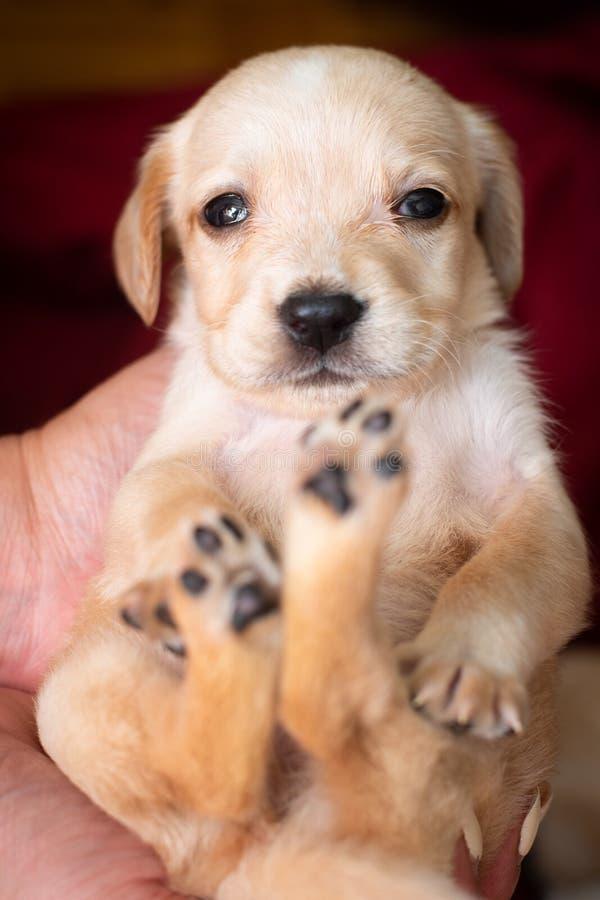 милый маленький щенок стоковое фото rf