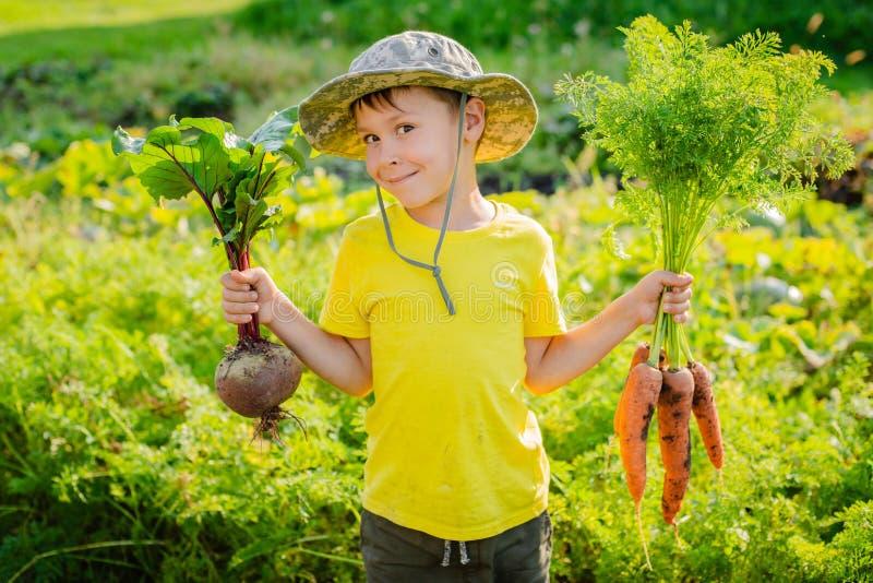 Милый мальчик держа пук свежих органических морковей в отечественном саде стоковое фото