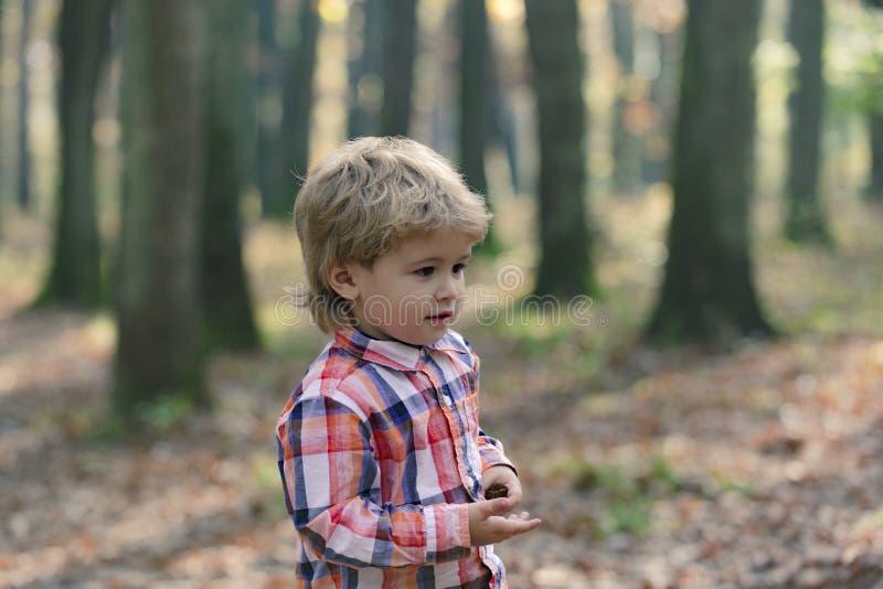 Милый мальчик маленького ребенка наслаждаясь днем осени Ребенок дошкольного возраста в красочных осенних одеждах имея потеху в са стоковое фото rf