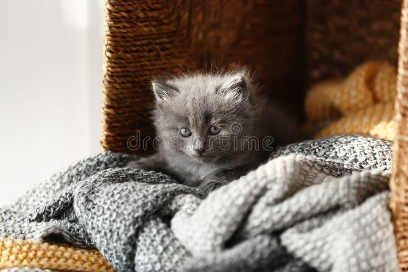 Милый меньший котенок на мягкой шотландке в плетеной коробке стоковые фотографии rf