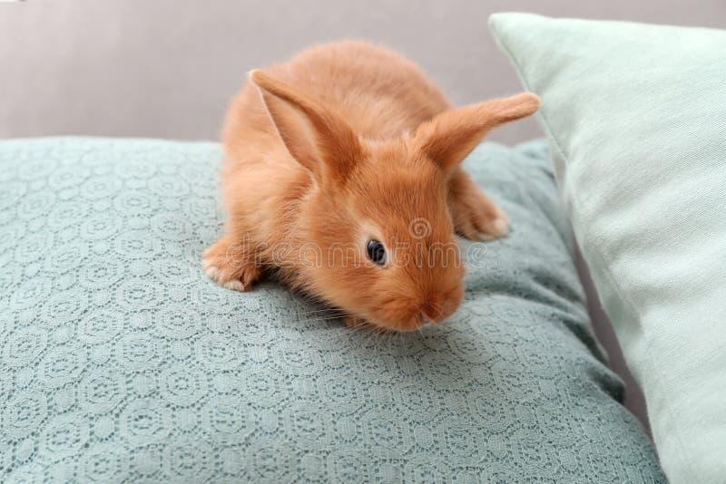 экране картинка зайцы на диване людей, которые