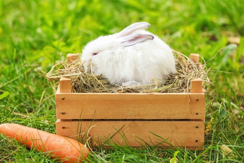 Милый пушистый кролик в деревянной клети outdoors стоковое фото rf