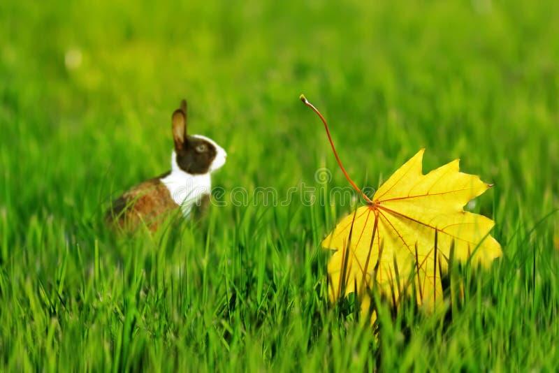 Милый пушистый кролик на зеленой траве с желтыми листьями осени Изображение художнической осени естественное стоковое изображение rf