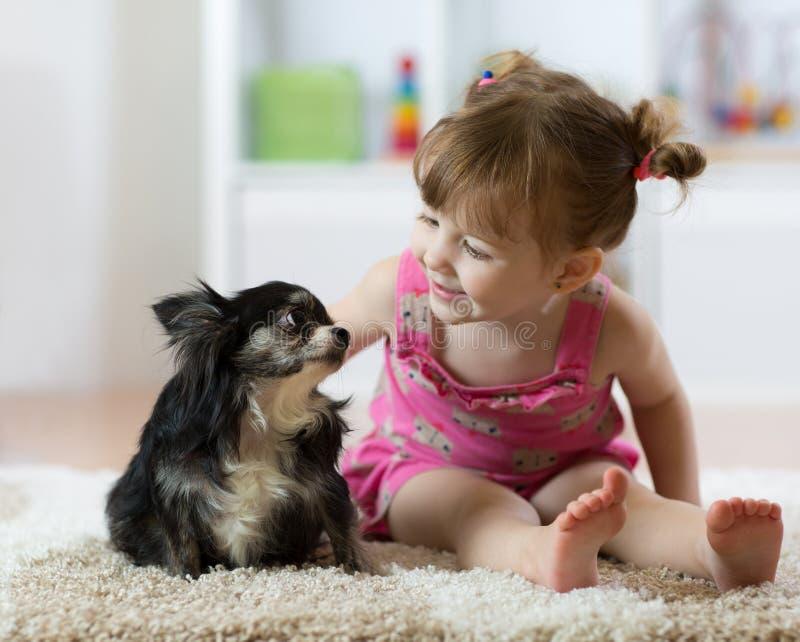 Милый ребёнок смотря собаку чихуахуа женщина портрета стороны крупного плана стоковые фотографии rf