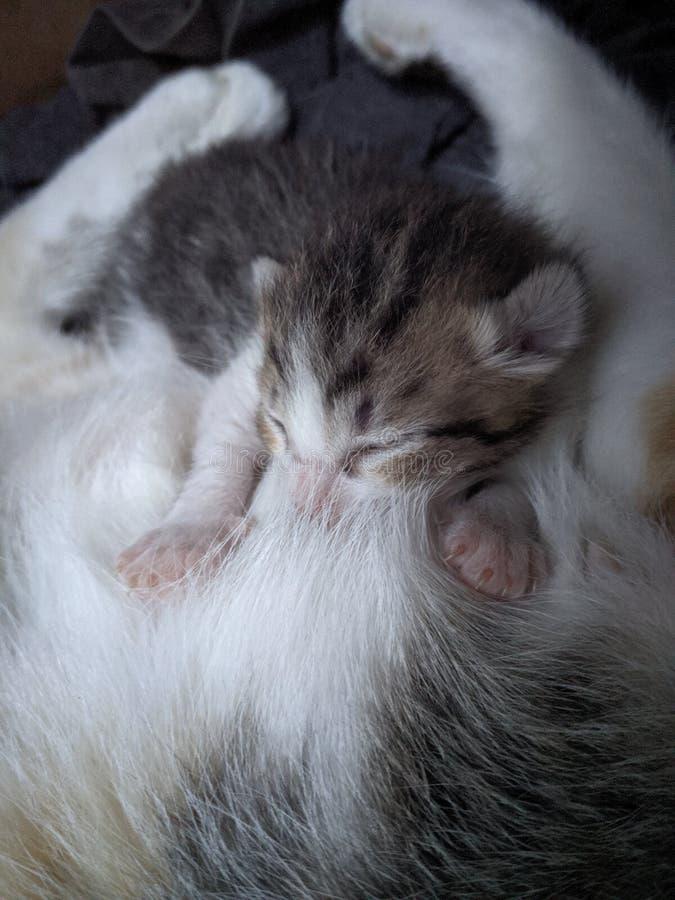 Милый уход котенка младенца стоковые изображения rf