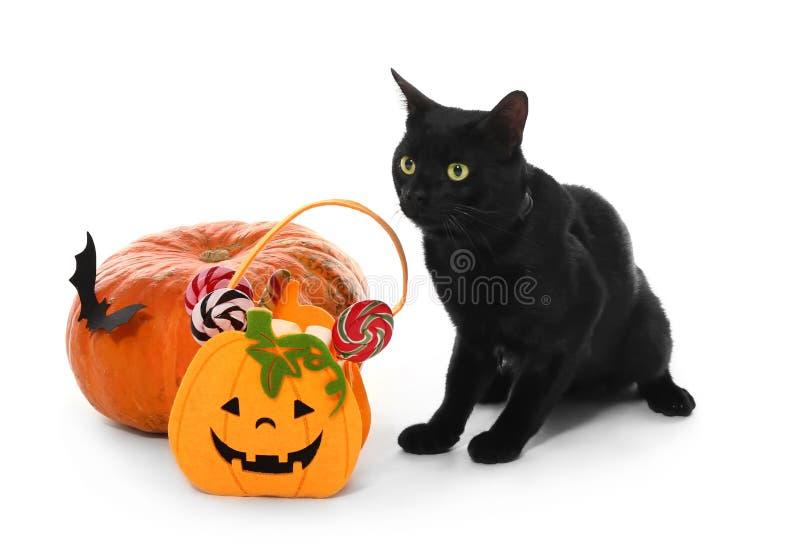 Милый черный кот, тыква хеллоуина и сумка с помадками на белой предпосылке стоковая фотография rf