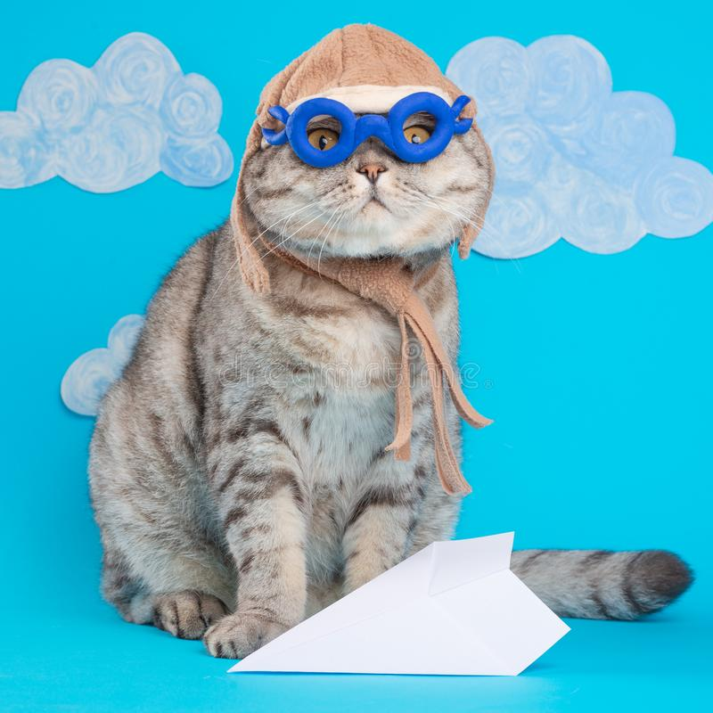 Милый шотландский кот в шлеме пилота на предпосылке тачек, с космосом для дизайна Концепция смешного кота стоковые фотографии rf