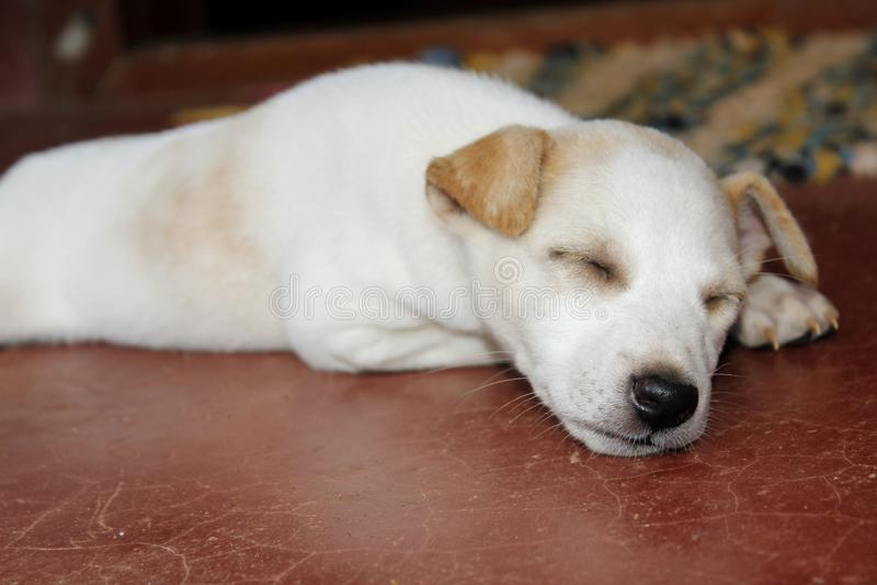 Милый щенок в глубоком сне стоковые фотографии rf