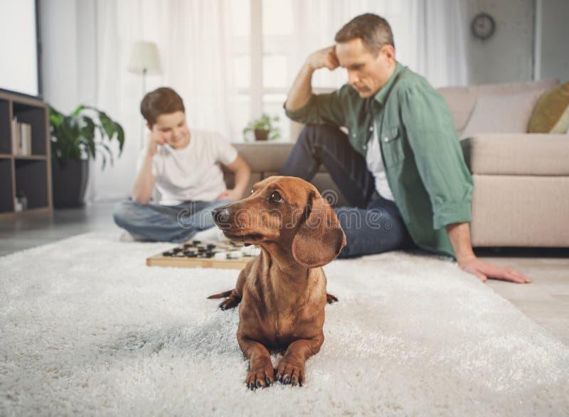 Милый щенок ослабляя на ковре около предпринимателей стоковое изображение rf