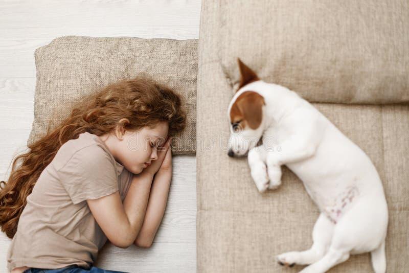 Милый щенок спит на кровати стоковое фото