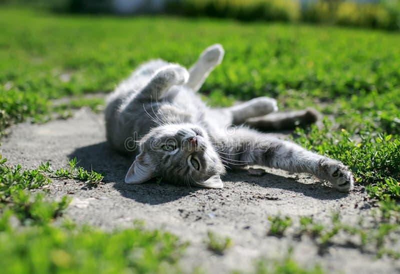 Милый striped котенок лежа и греясь в теплом солнце весны дальше стоковое фото rf