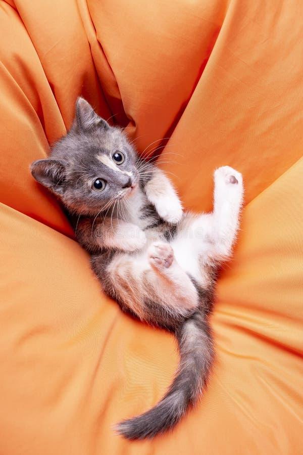Милый tricolor котенок лежа на мягкой оранжевой подушке на его назад a стоковые фотографии rf