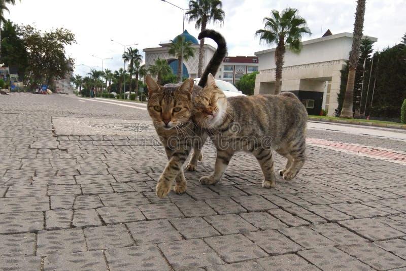 2 милых кота игриво идя вдоль улицы южного города Сфотографированный на смартфоне стоковая фотография