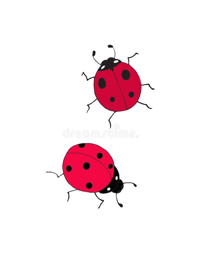 2 милых ladybugs с маленькими слепыми пятнами стоковая фотография rf