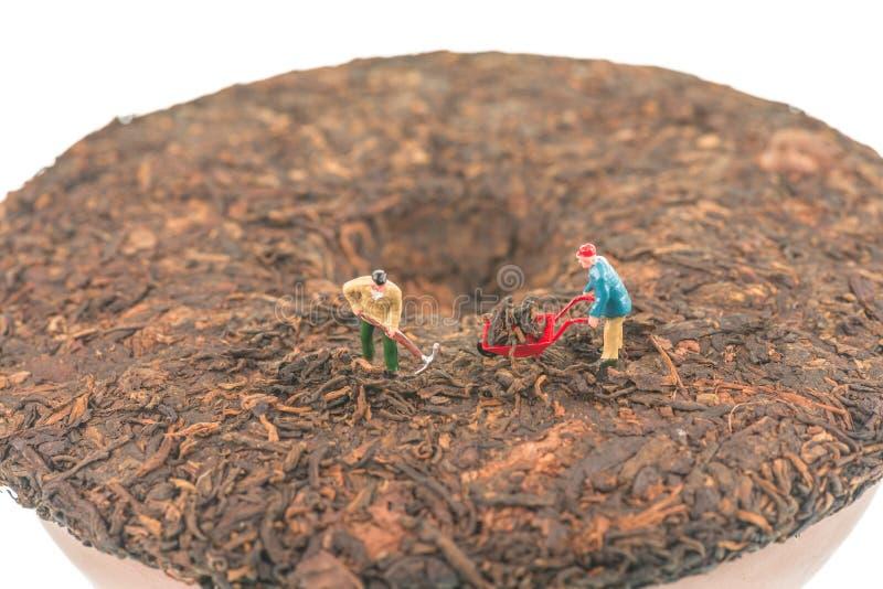Миниатюрные работники на pu-erh обжали китайское взгляд сверху торта чая стоковые фото