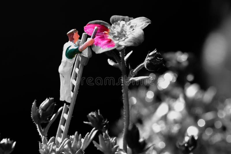 Миниатюрный оформитель художника масштабной модели крася Saxifraga Arendsii стоковые фотографии rf