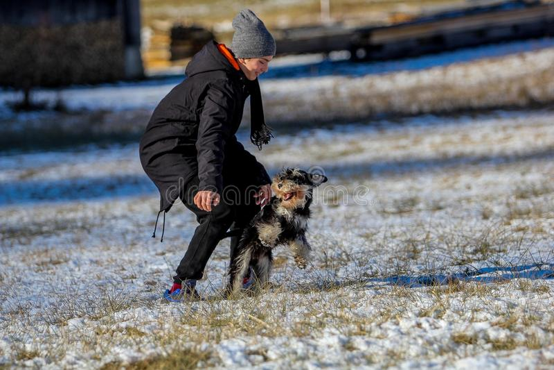 Миниатюрный шнауцер стоя идущий в снеге стоковые фото