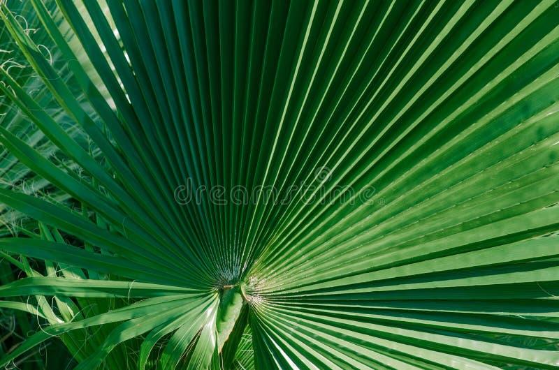 Минимальная троповая концепция листья крупного плана palma стоковая фотография