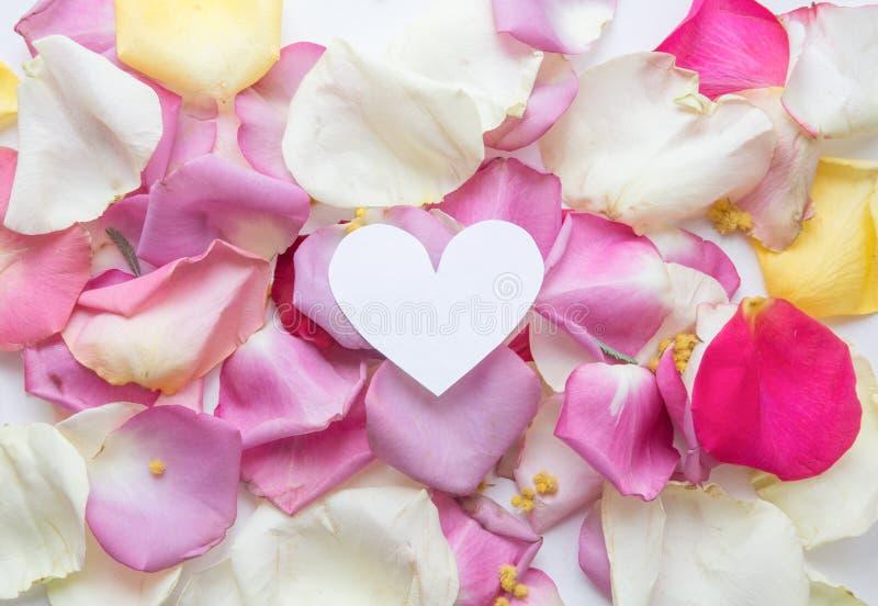 Минимальный стиль Минималистская фотография моды Розовые лепестки розы установили на белую предпосылку flatlay r стоковые изображения rf
