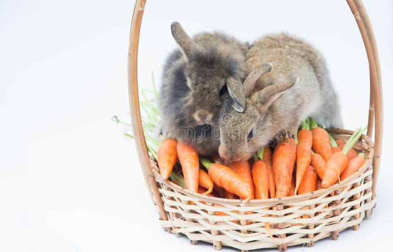 Мини кролик 2 с морковами на baske стоковая фотография