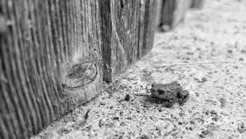 Мини лягушка стоковая фотография