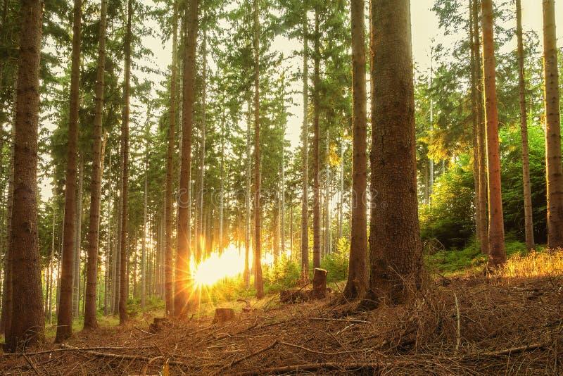 Мирная или спокойная сцена природы стоковая фотография