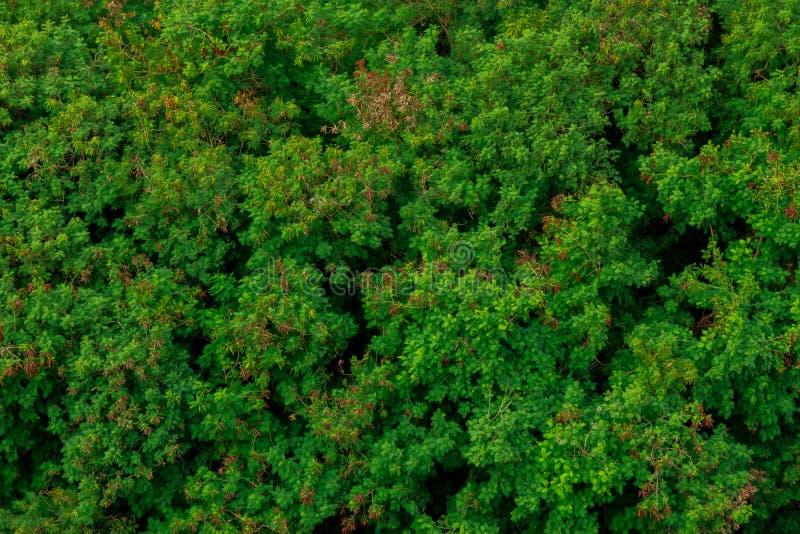 Мирная растительность джунглей символизируя свежую дышает воздуха и стоковая фотография rf