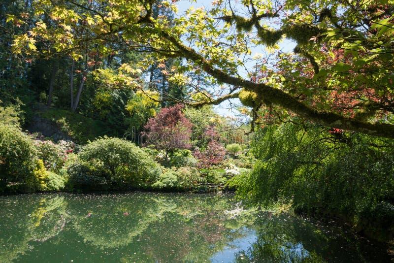 Мирное озеро в садах butchart, кустах и зеленых деревьях, острове ванкувер стоковые изображения rf