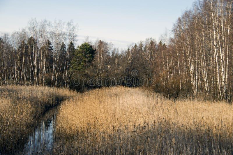 Мирный пейзаж луга стоковые фото