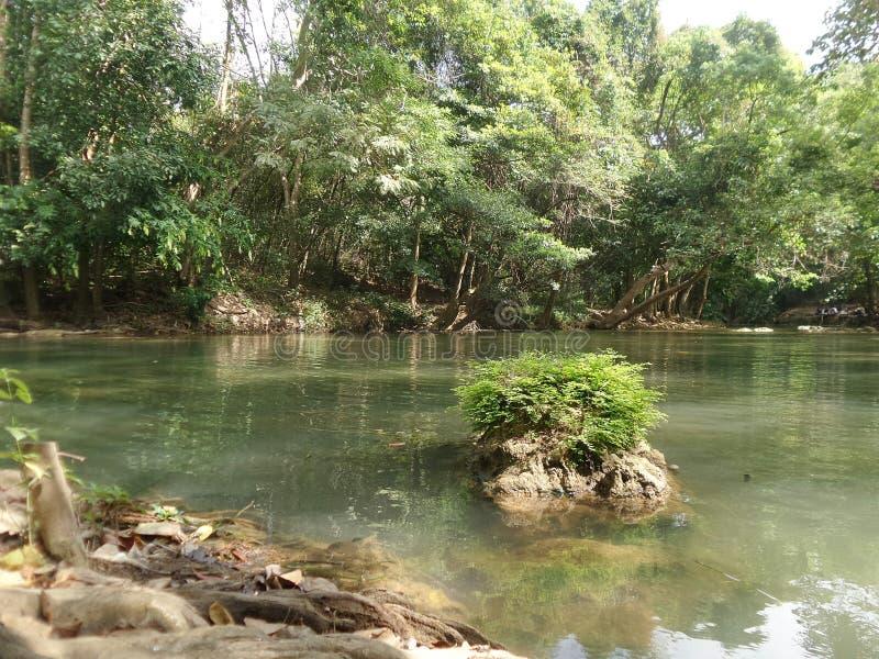 Мирный поток вдоль зеленого леса стоковое фото rf