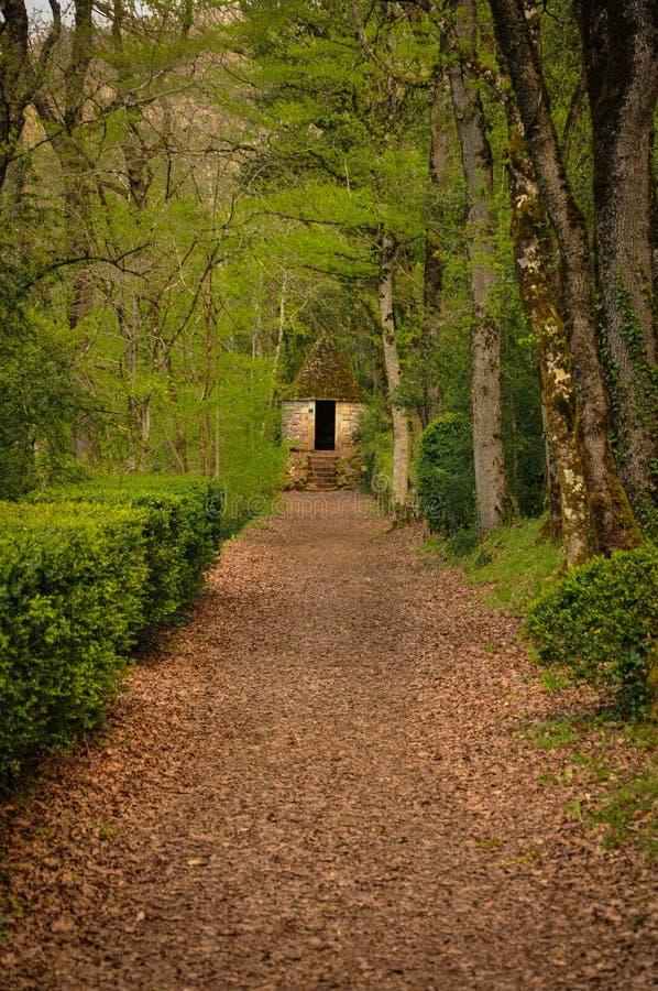 Мирный путь в середине леса стоковое изображение rf