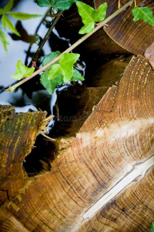 миры ствола дерева стоковые изображения rf