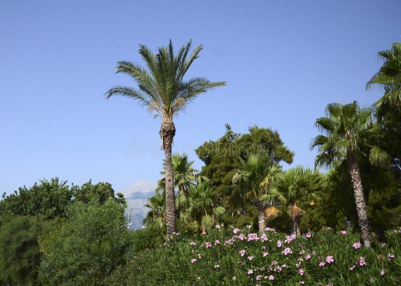 Мир вегетации Kemer стоковое фото rf