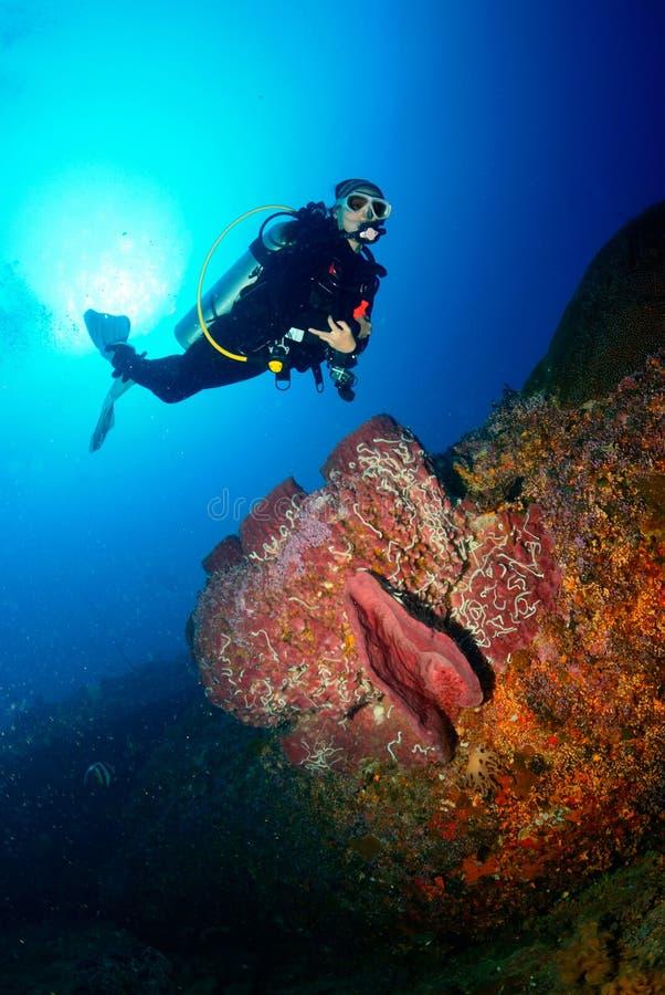 Мир водолаза акваланга подводный стоковые фото