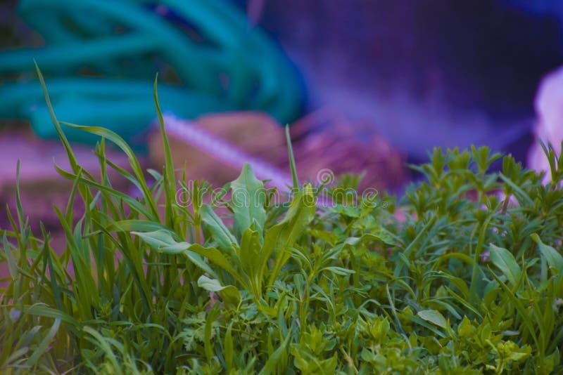 Мир в зеленых цветах стоковое изображение