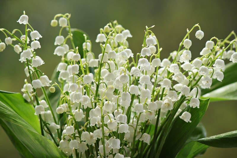 Download мир глуши долины природы лилии русский Стоковое Изображение - изображение насчитывающей влюбленность, напольно: 40587803