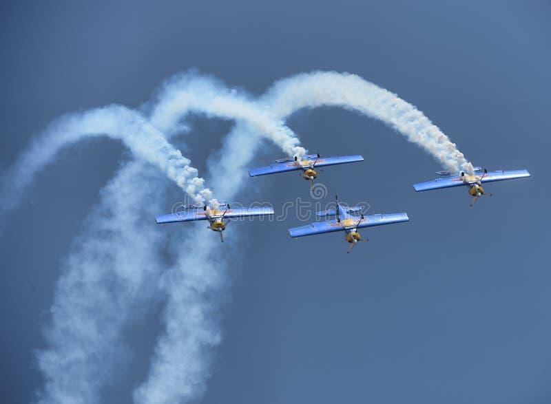 Быки летания стоковая фотография rf