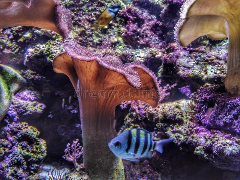 Мир моря стоковое фото rf