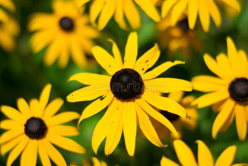 Мир фестиваля Faeries установил/цветка желтого цвета стоковая фотография