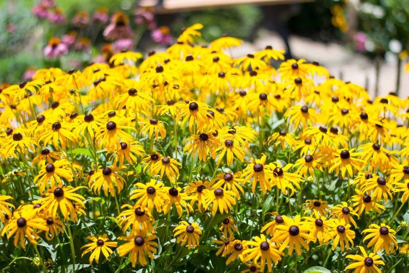 Мир фестиваля Faeries установил/цветка желтого цвета стоковое изображение rf