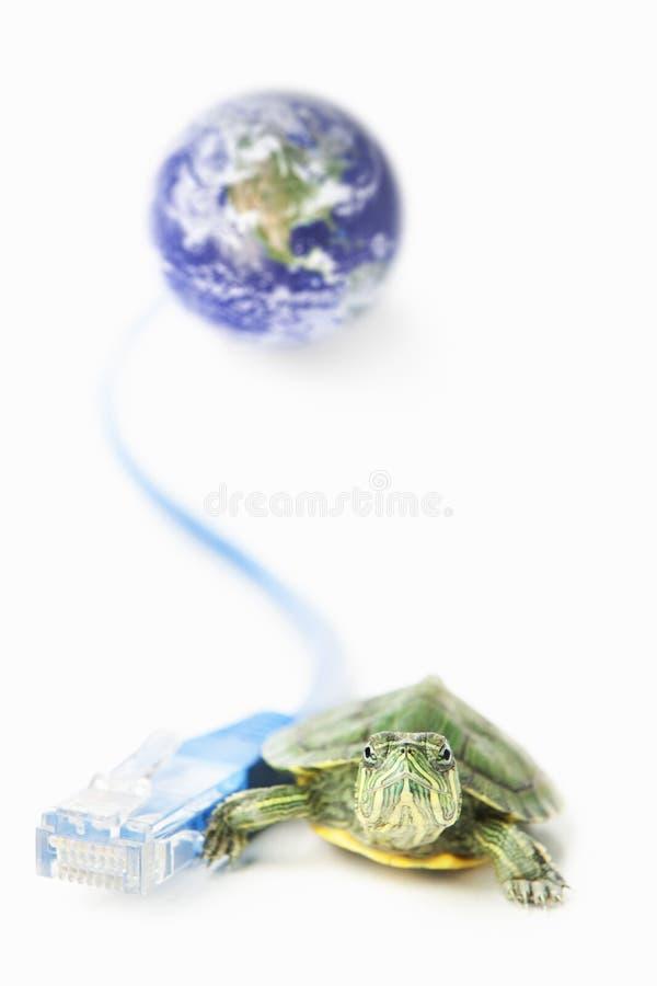 мир черепахи lan глобуса кабеля стоковое фото rf