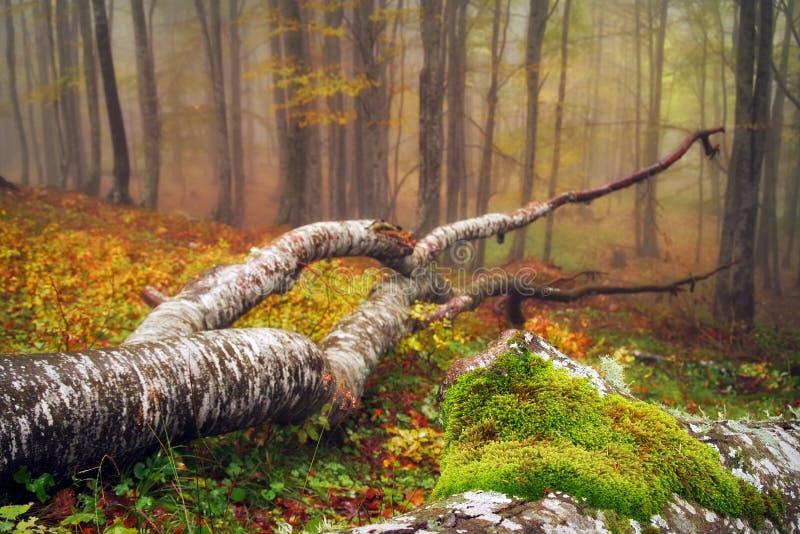 Мистическая пуща стоковое фото rf