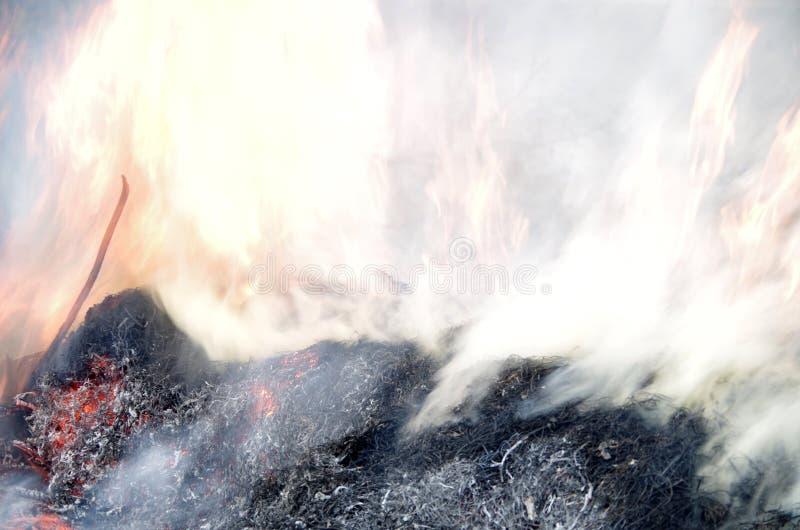 Мистический дым стоковое изображение rf
