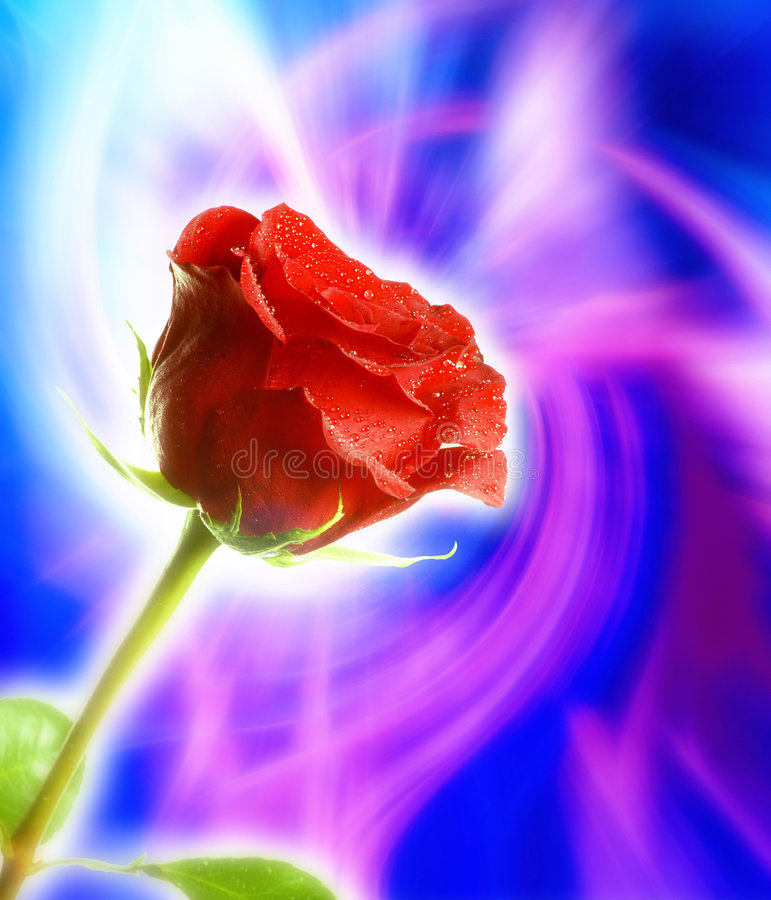 мистический красный цвет поднял стоковое изображение