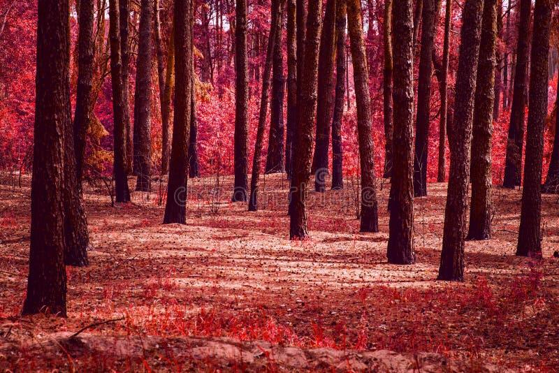 Мистический луг в фантастическом лесе никто вокруг за исключением красной осени стоковое фото