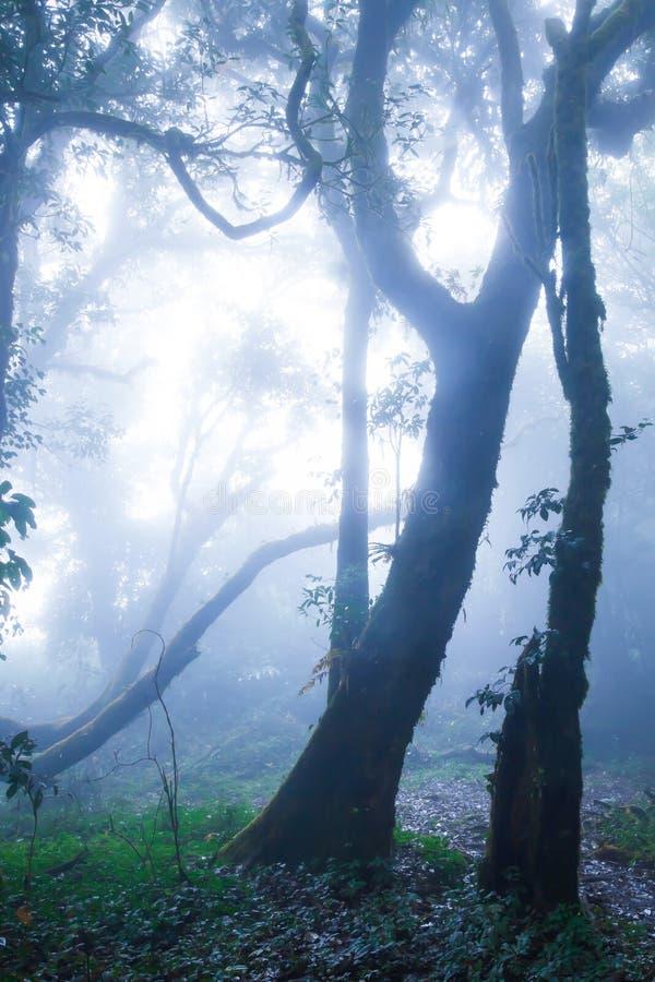 Мистический первобытный лес в синей мистике стоковая фотография