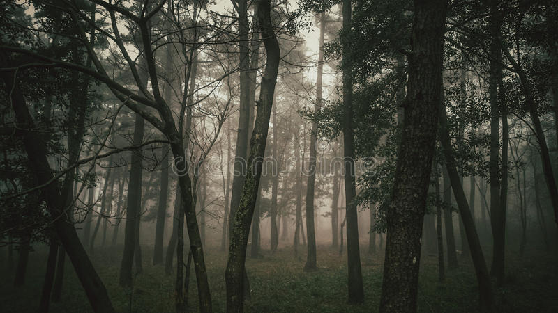 Мистический туманный лес стоковое фото rf