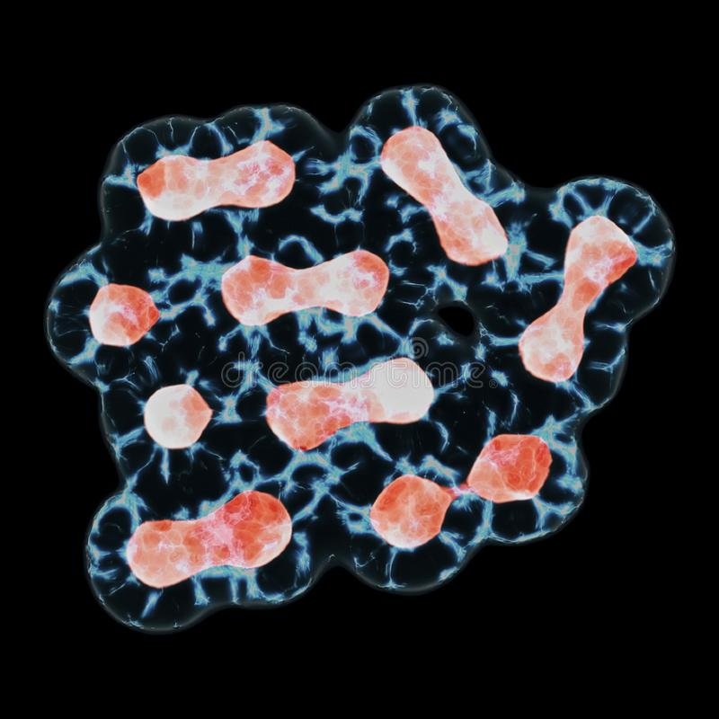 Митоз, процесс разделения клетки и умножение стоковые фото